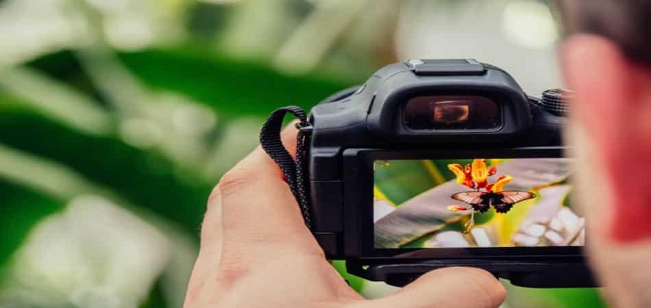 best macro lens for Nikon